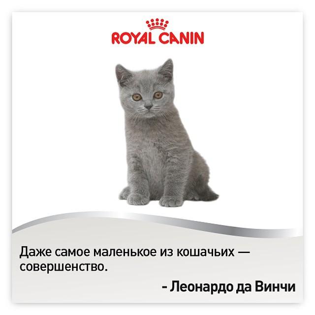 Корм для собак ульяновск